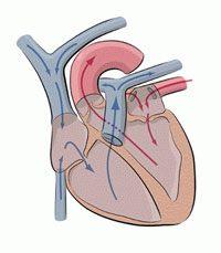 prolapsul valvei mitrale