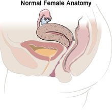 Gynecologic conditions - normal female anatomy - da vinci