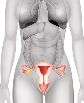 cancere genitale instrumente pentru tratarea persoanelor cu viermi